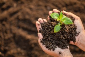 green-tree-soil-science